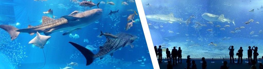 療育手帳と沖縄美ら海水族館